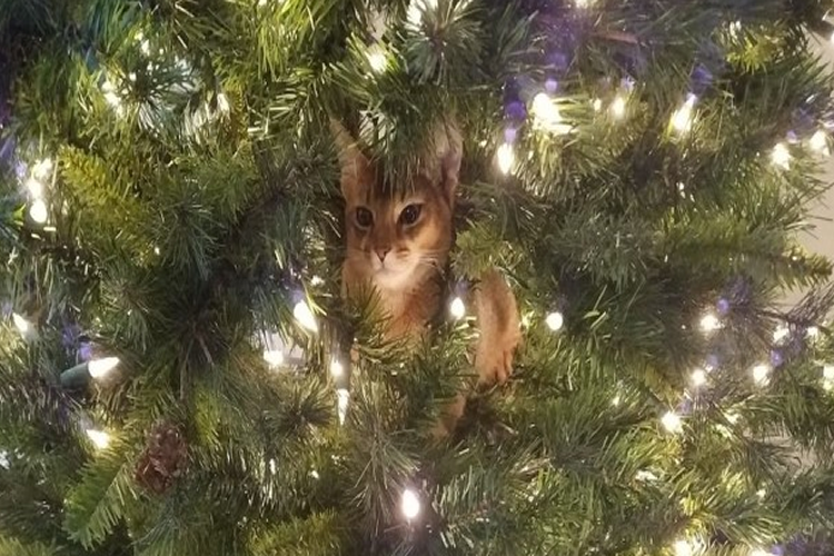 29 Cats Just Helping Out With The Christmas Tree