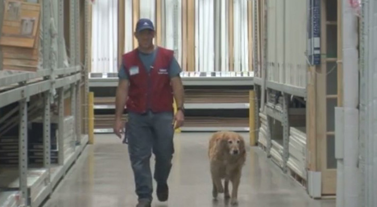 Veteran struggles to get a job because of service dog, Lowe's de