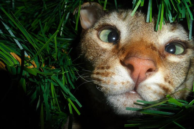29 Cats That Just Want To Help You Decorate Your Tree